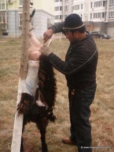A Uyghur man skins a sheep for Corban in Xinjiang, China