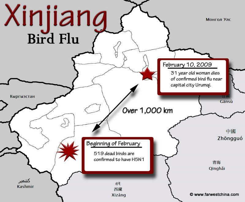 bird flu outbreak in xinjiang what does this mean. Black Bedroom Furniture Sets. Home Design Ideas