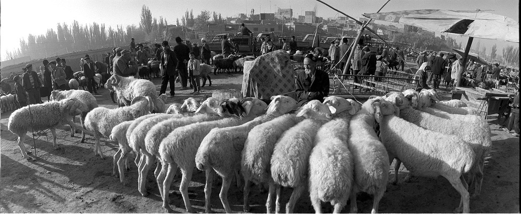Sheep line up at the Sunday market outside Kashgar