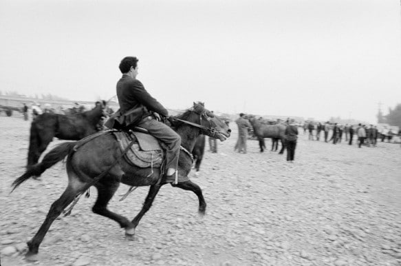 A horse being tested at Kashgar's livestock market in Xinjiang