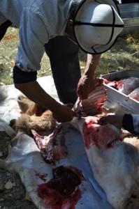 A man butchers a sheep to celebrate a Tajik wedding in Xinjiang, China