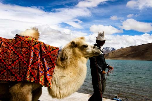 A tourist camel at Karakul Lake on the Karakoram Highway in Xinjiang