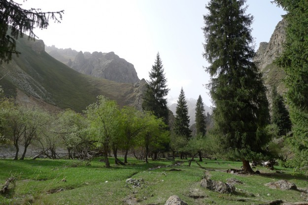 Trees in the Xinjiang Tian Shan in China
