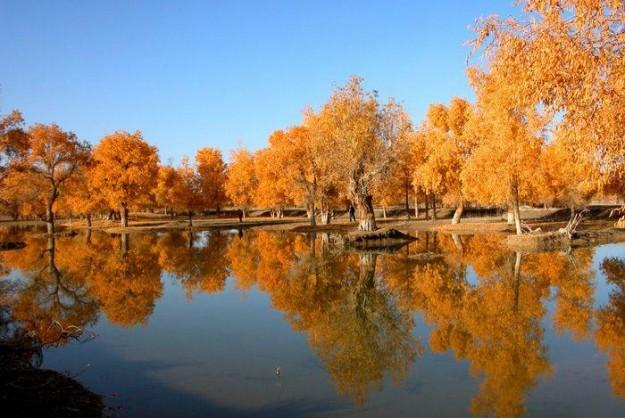Xinjiang's Tarim River Park along the Taklamakan Desert 塔里木胡杨林公园