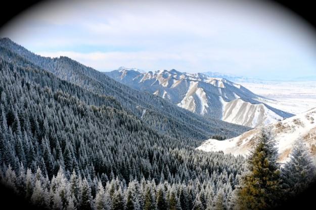 Beautiful forest and rolling hills of the Xinjiang NanShan