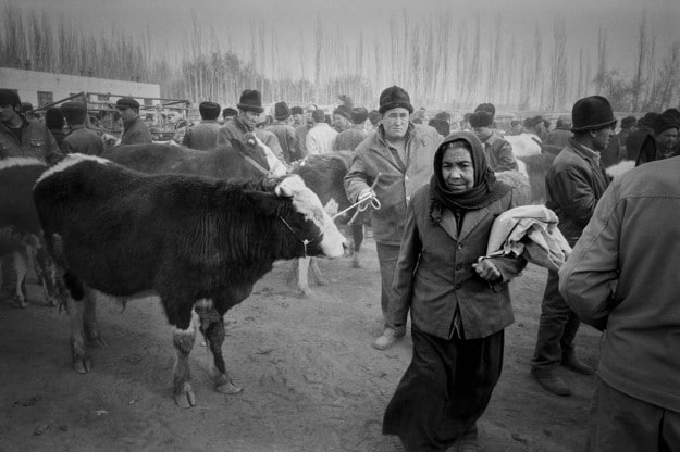 A look at Kashgar's Livestock Market by Ryan Pyle