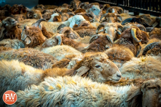 Sheep all gathered in their sheep pen in Urumqi, Xinjiang for the Corban Festival
