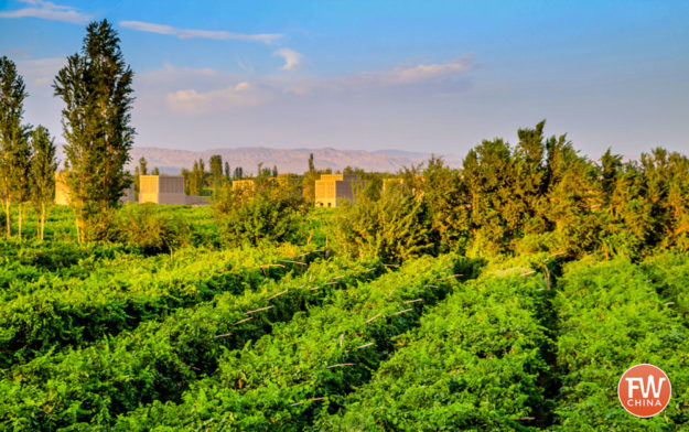 Grape Vineyards of Turpan, Xinjiang