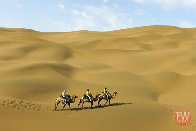 Xinjiang camels in the desert