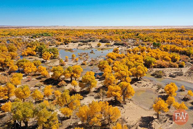 Xinjiang Diversiform Poplar Forrest
